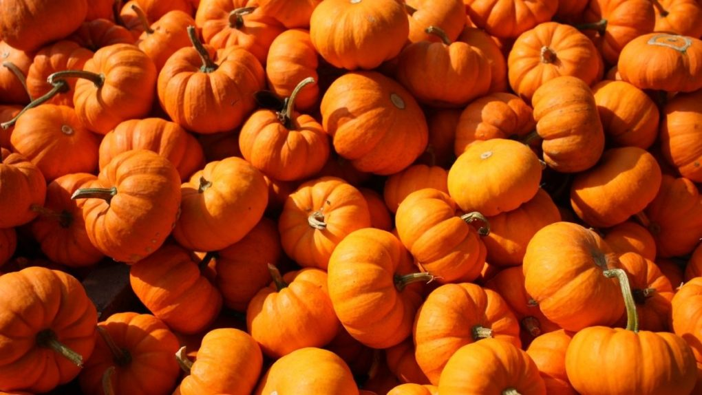 fall promotion ideas