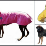 3 dogs with clothes